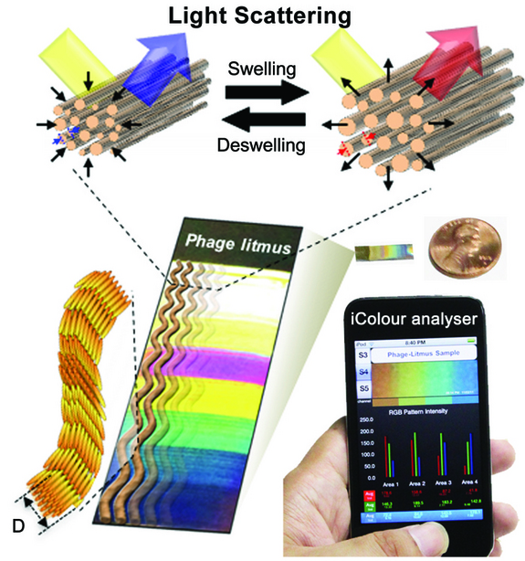 Color-Changing Turkey Skin Inspires Berkeley Researchers To Develop Smartphone Toxin Sensor