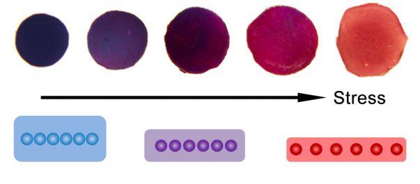 Revolutionary High-Resolution Pressure Sensor Links Color To Pressure Applied – University Of California