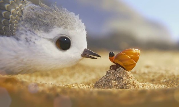Watch Pixar's Gorgeous Short Film 'Piper' Online For Free